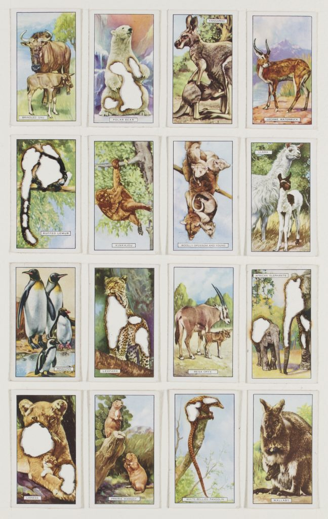 Hit List (Players cigarettes, 16 wild animals, 1923), 2017. Burnt cigarette cards. 37 x 26 cm.