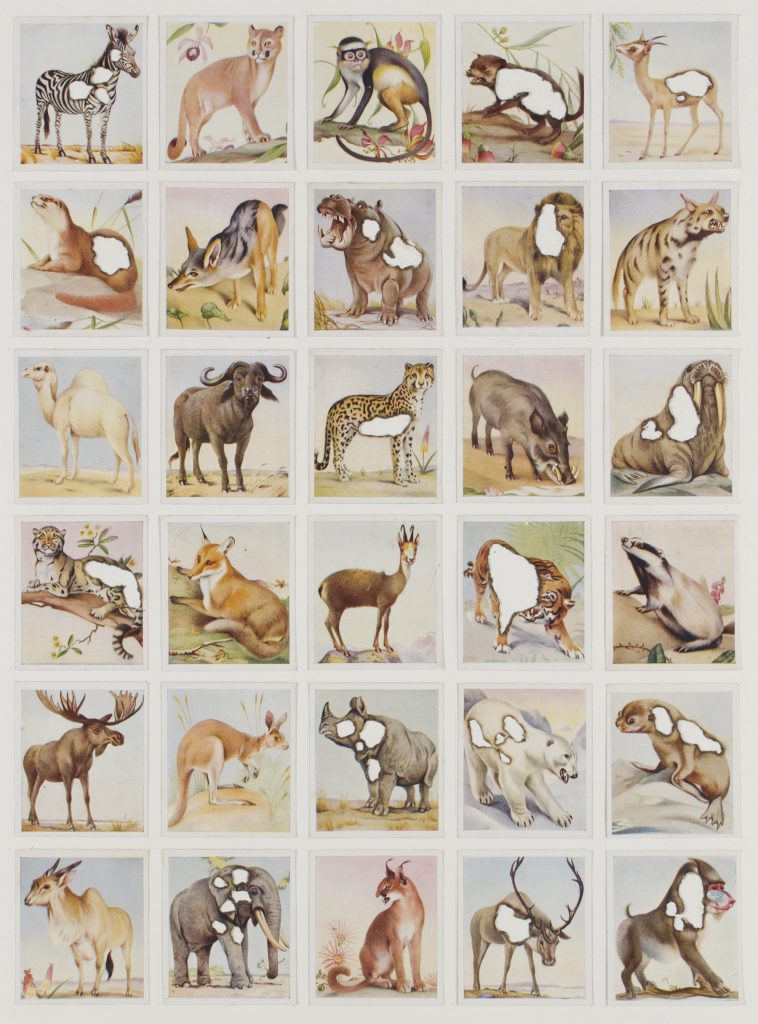 Hit List (Godfrey phillips cigarettes, 30 Zoo animal studies, 1936), 2017. Burnt cigarette cards. 48 x 38 cm.