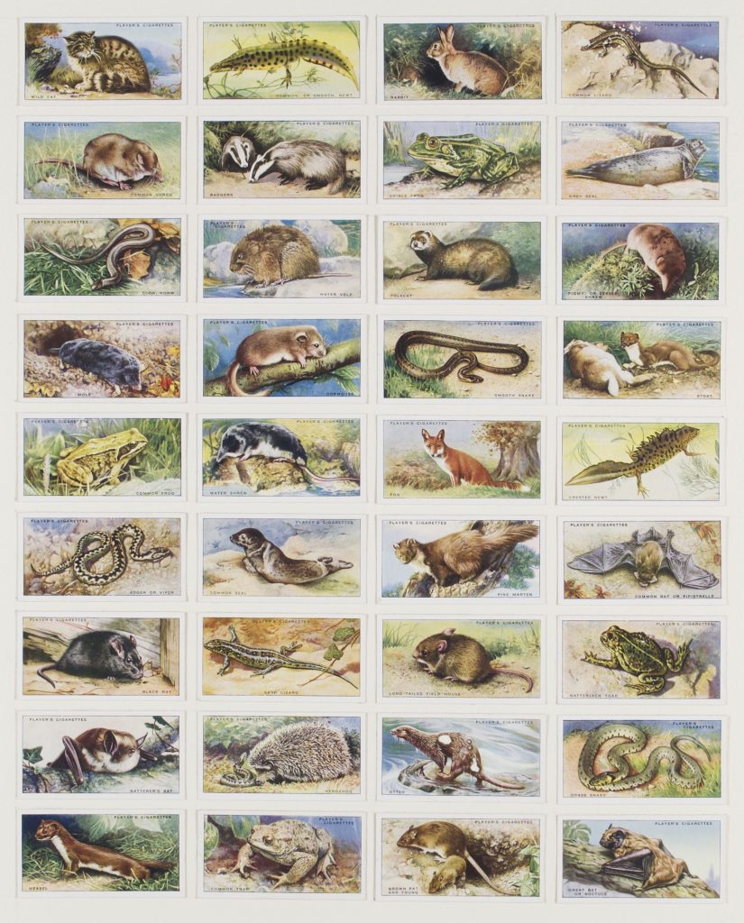 Hit List (Players cigarettes, 36 animals of the UK countryside, 1939), 2017. Burnt cigarette cards. 46 x 38 cm.