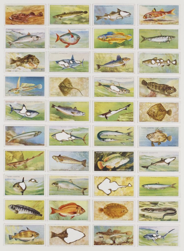 Hit List (Players cigarettes, 40 sea fishes, 1935), 2017. Burnt cigarette cards. 49 x 39 cm.