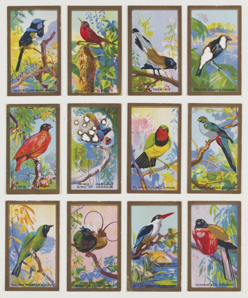 Hit List (Abdula and Co cigarettes, 12 Feathered friends, 1935), 2017. Burnt cigarette cards. 30 x 26 cm.