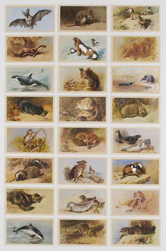 Hit List (Players grandee cigarettes, 24 British mammals, 1982), 2017. Burnt cigarette cards. 54 x 38 cm.