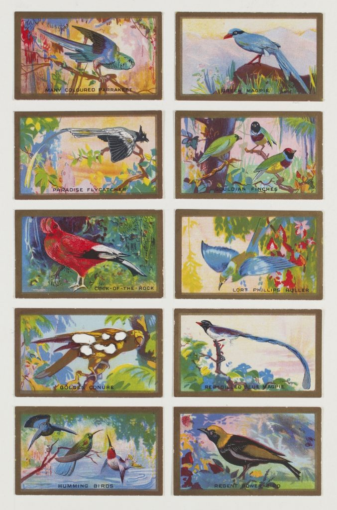 Hit List (Abdula and Co cigarettes, 10 Feathered friends, 1935), 2017. Burnt cigarette cards. 30 x 23 cm.