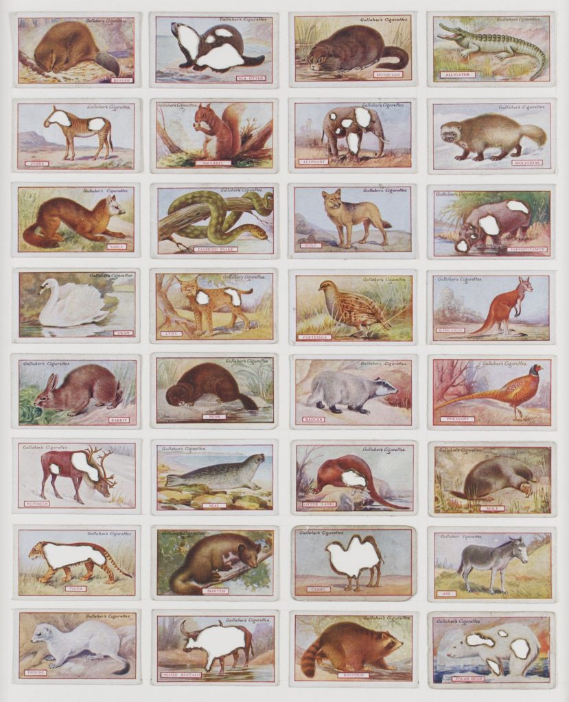 Hit List (Gallaghers cigarettes, 32 animals of commercial value, 1921), 2017. Burnt cigarette cards. 41 x 35 cm.