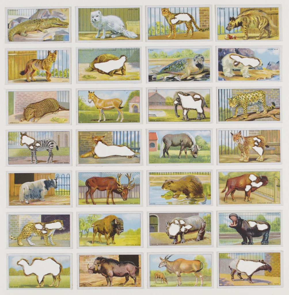 Hit List (Morris cigarettes, 28 zoo animals, 1924), 2017. Burnt cigarette cards. 39 x 39 cm.