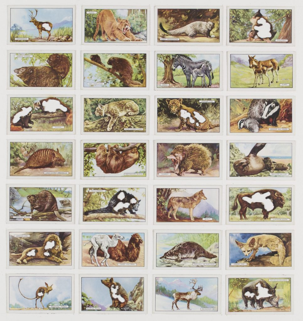 Hit List (Players cigarettes, 28 wild animals, 1923), 2017. Burnt cigarette cards. 39 x 37 cm.