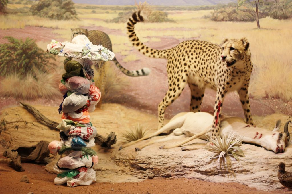 Diorama series: Cheetah, 2013. Digital colour photograph.
