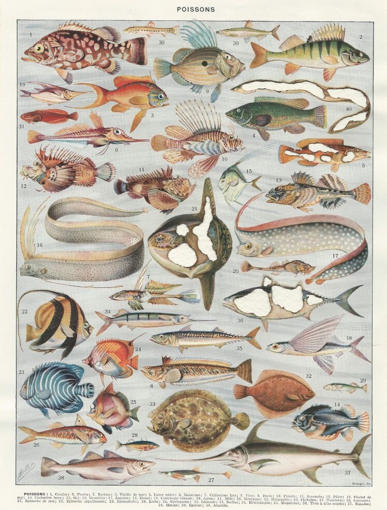 Hit List: Poissons, 2018. A burnt page from a French encyclopaedia. 22x28 cm.