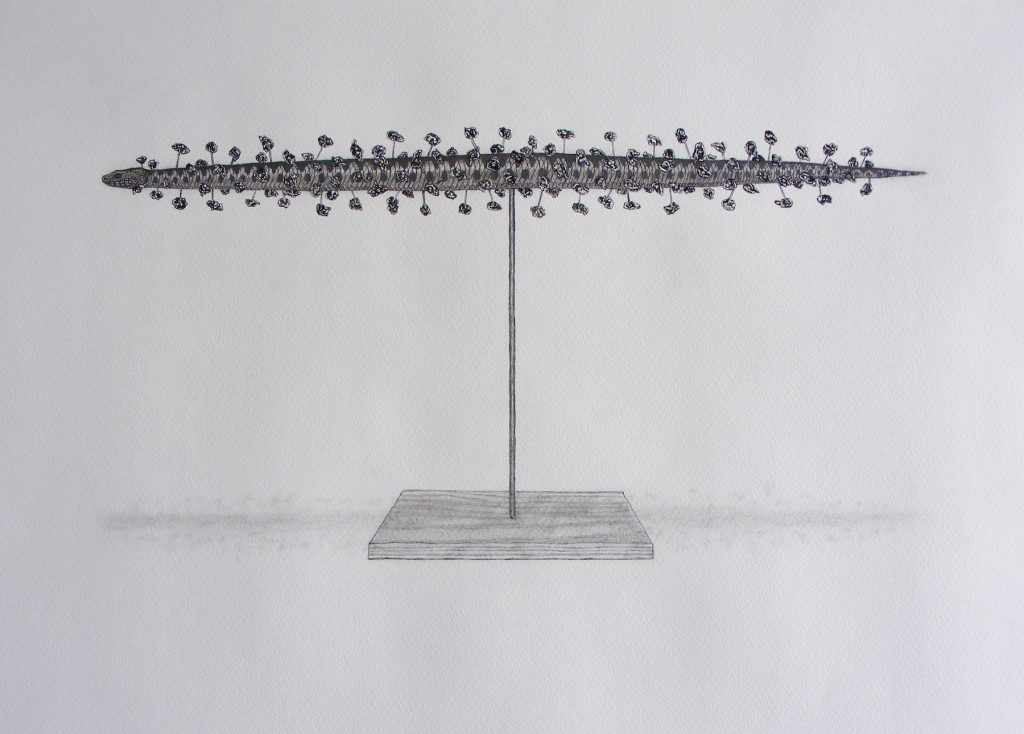 Soloution to Ophidiophobia, 2010. Graphite on paper. 42x59cm's.