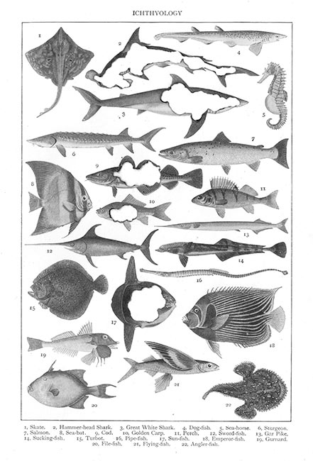 Hit List: Ichthyology, 2018. 54 x 40 cm. Giclee print on cotton rag paper. Limited edition of 50. £150.