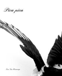 pica pica book cover