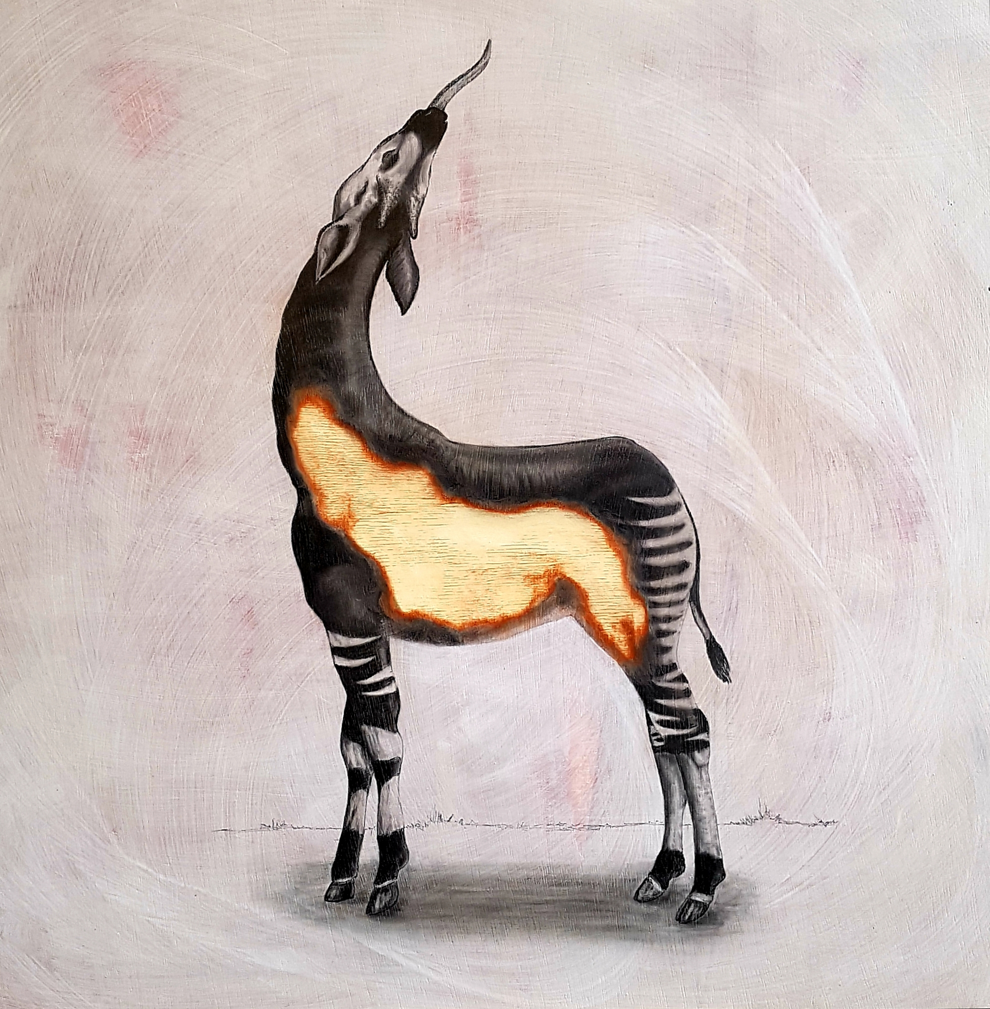The Okapi, 2019. Graphite on white washed plywood that is then sanded.  65 x 65 x 4 cm. Framed in white varnished obeche. SOLD.