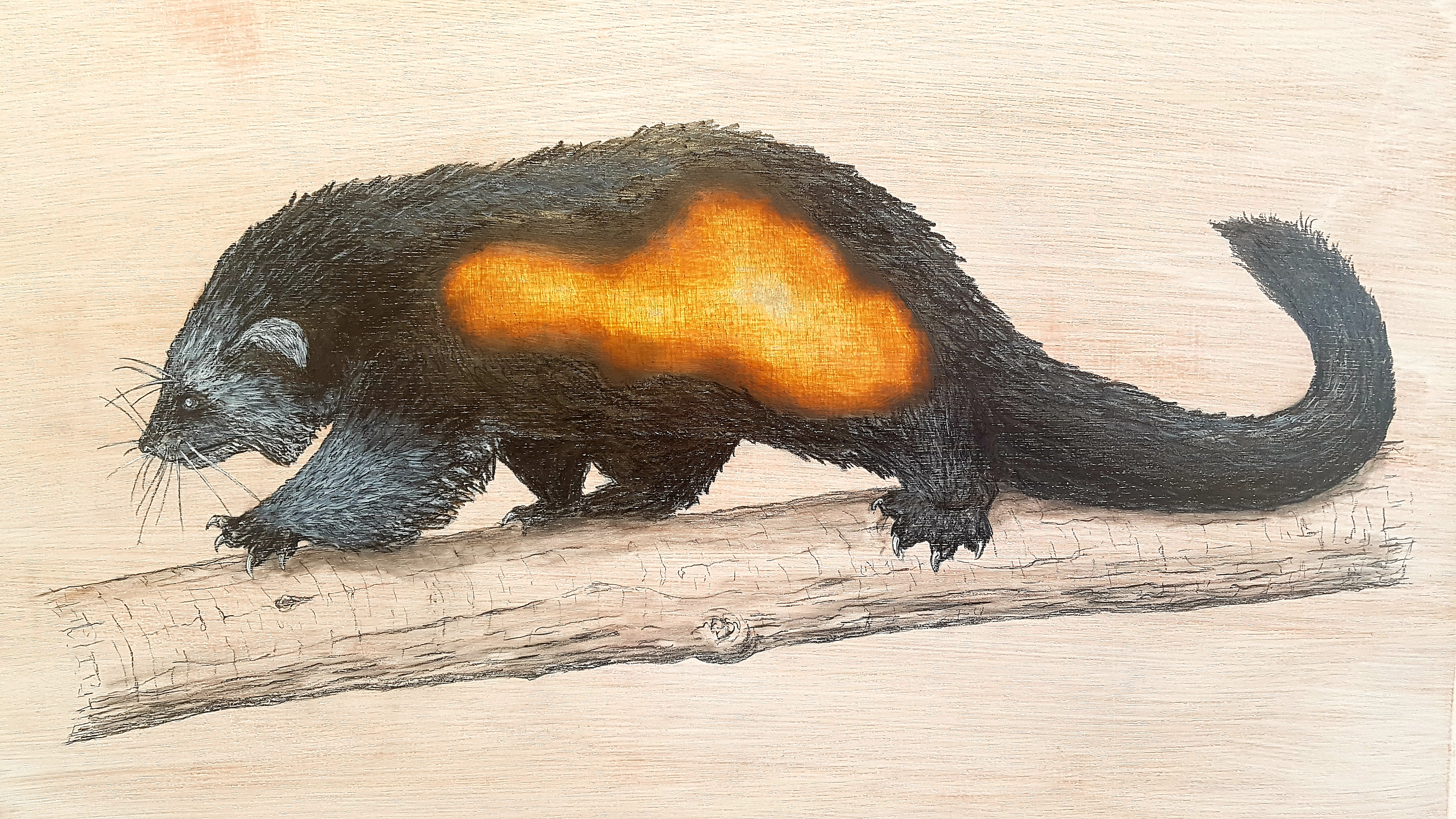 The Binturong, 2019. Graphite and ink on white washed plywood that is then sanded.  45 x 60 x 4 cm. Framed in white varnished obeche.  £900.