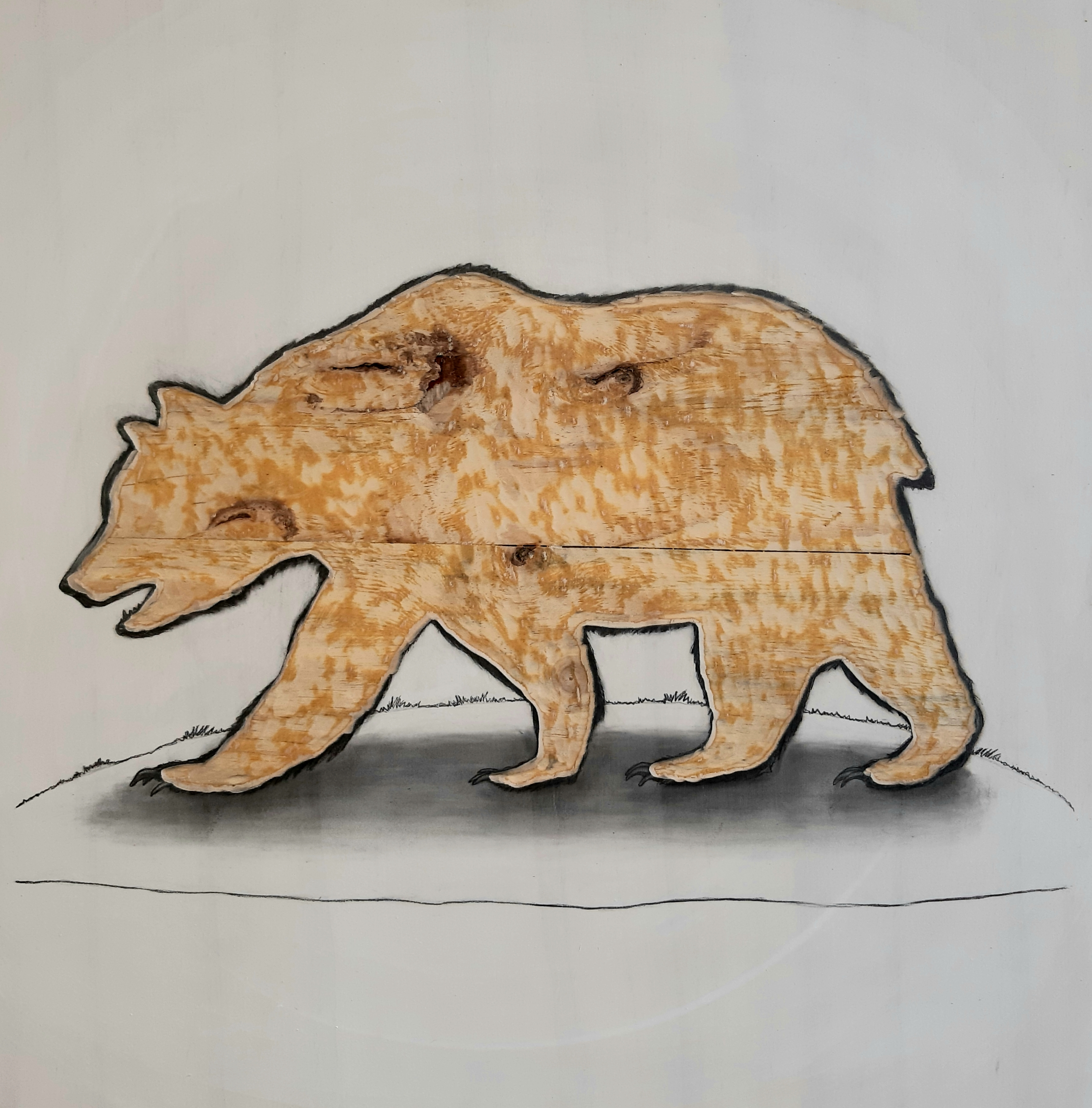 The California Grizzly Bear, 2019.  Graphite on white washed plywood that is then sanded.  65 x 65 x 4 cm. Framed in white varnished obeche. SOLD.