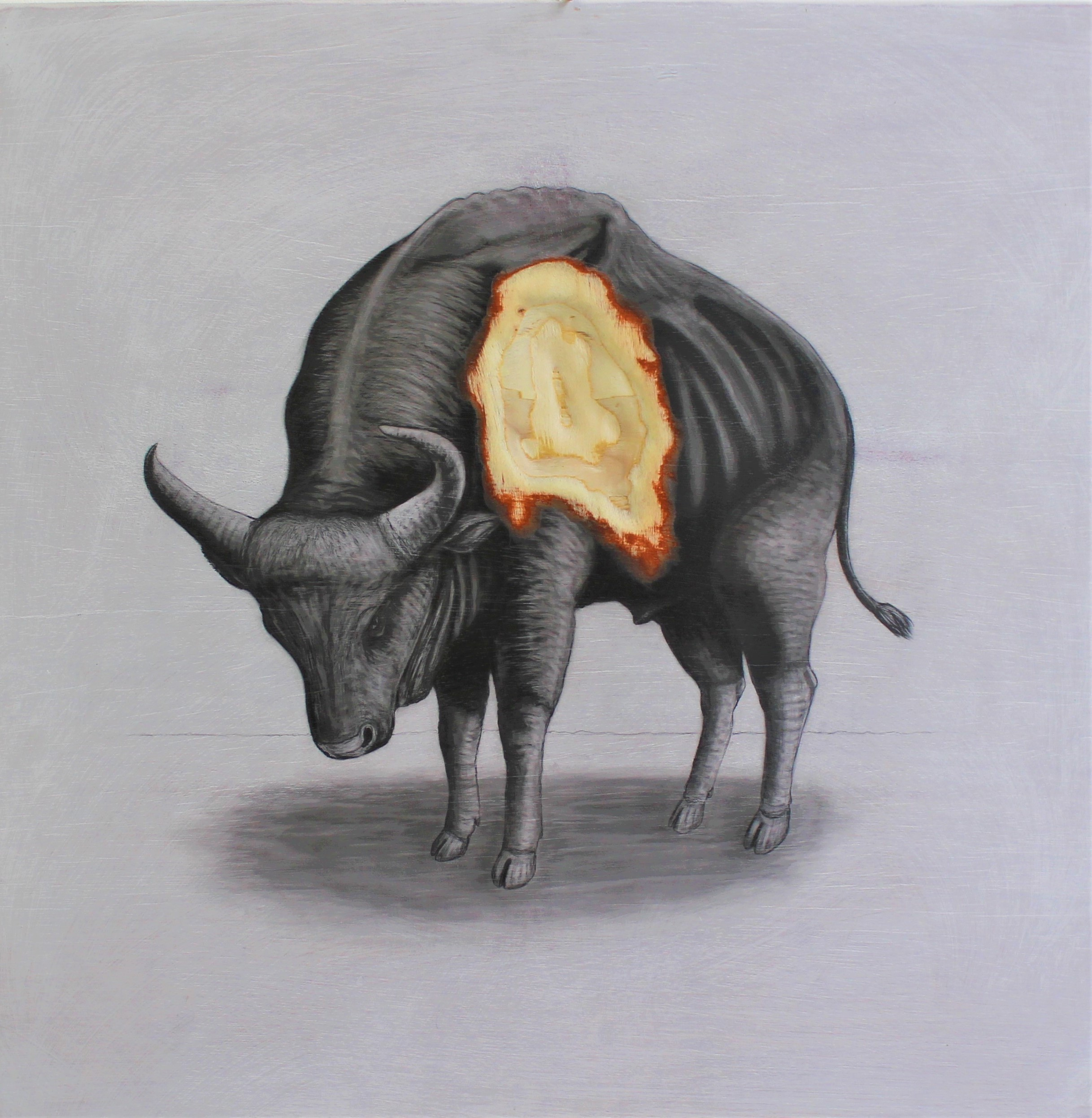 The Gaur, 2019. Graphite on white washed plywood that is then sanded.  65 x 65 x 4 cm. Framed in white varnished obeche. £1,500.