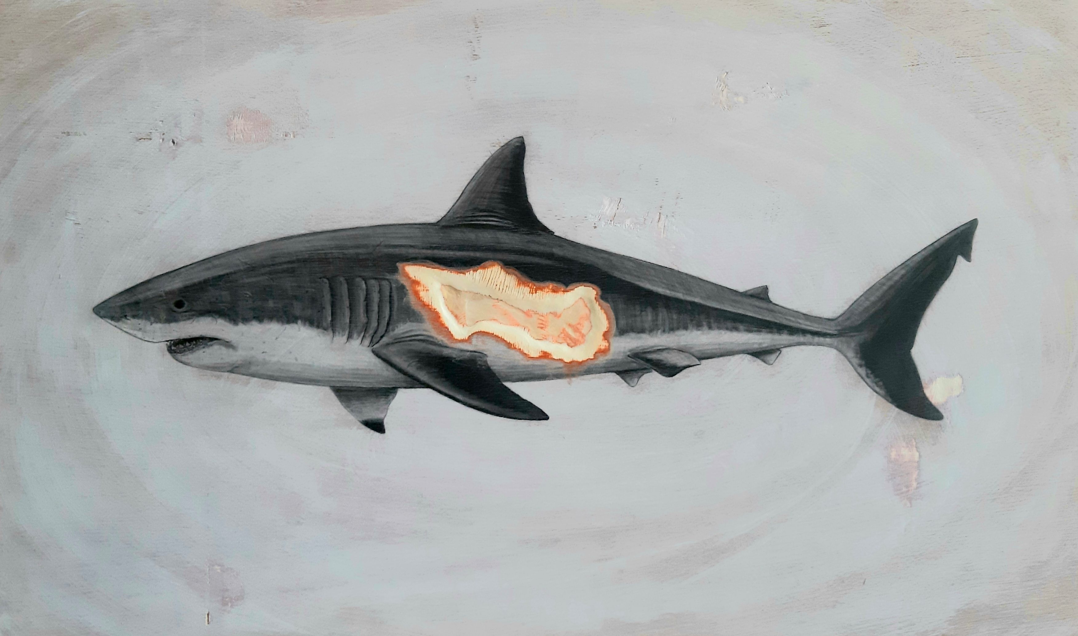 The Great White Shark (female), 2019. Graphite on white washed plywood that is then sanded.  60 x 120 x 4 cm. Framed in white varnished obeche. SOLD.