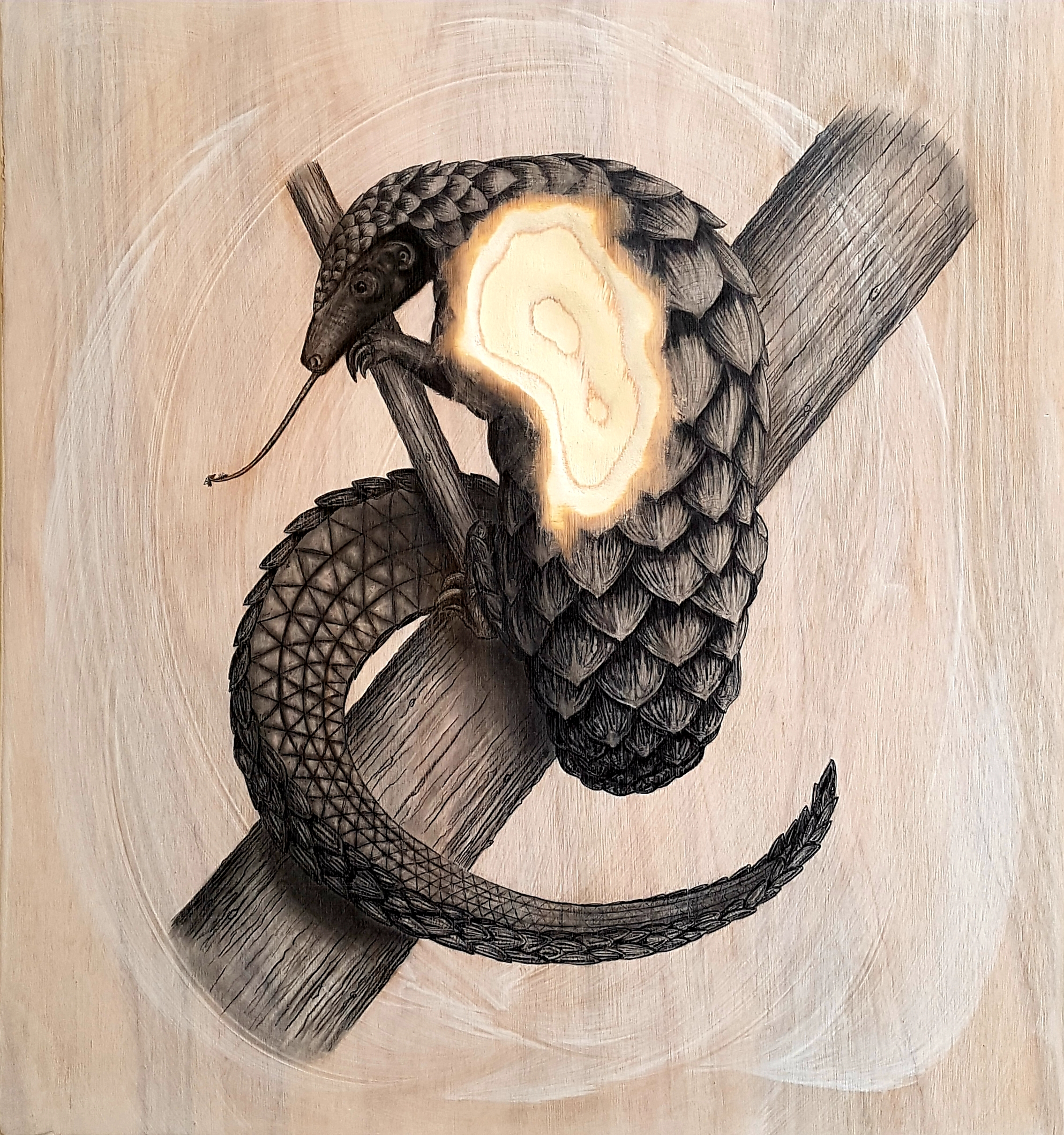 The Long-tailed Pangolin, 2019. Graphite on white washed plywood that is then sanded.  65 x 65 x 4 cm. Framed in white varnished obeche. SOLD.