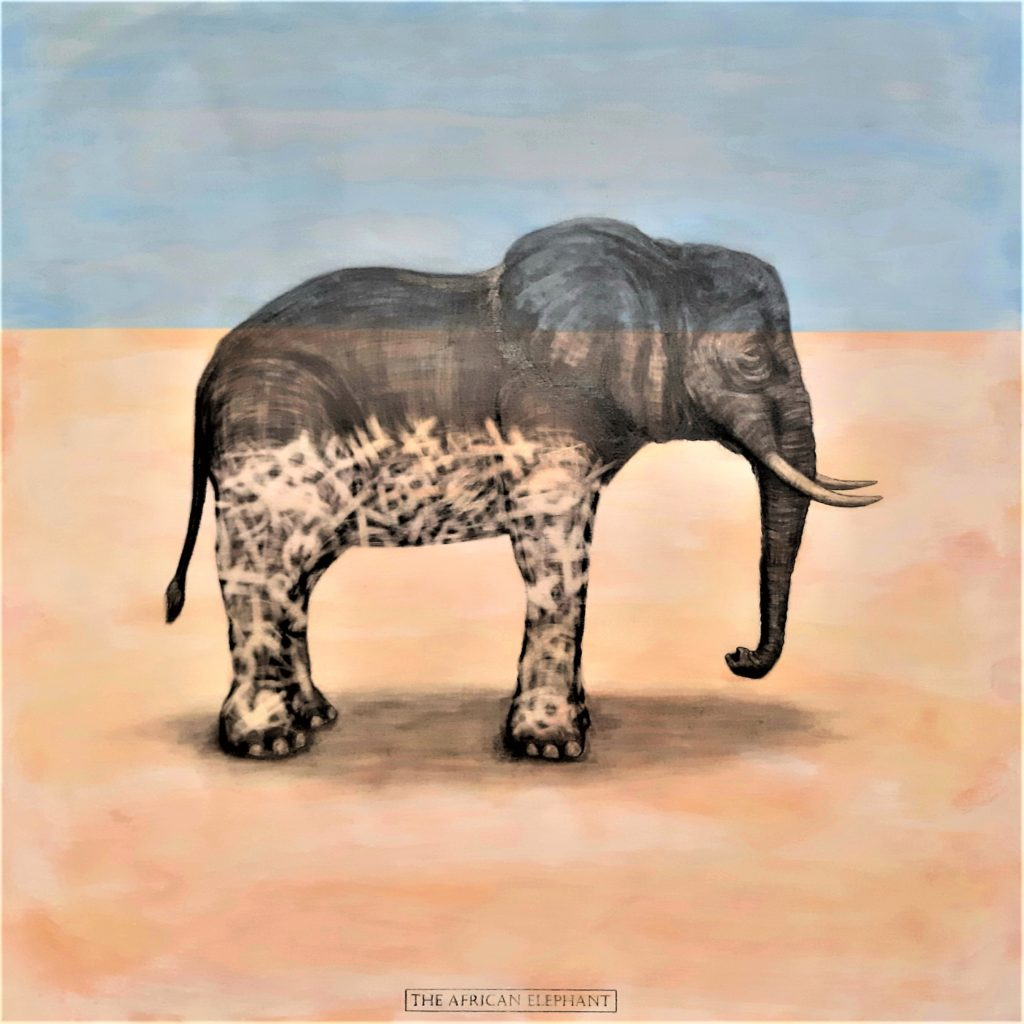 The African Elephant, 2019. Graphite and acrylic on plywood. 65 x 65 cm