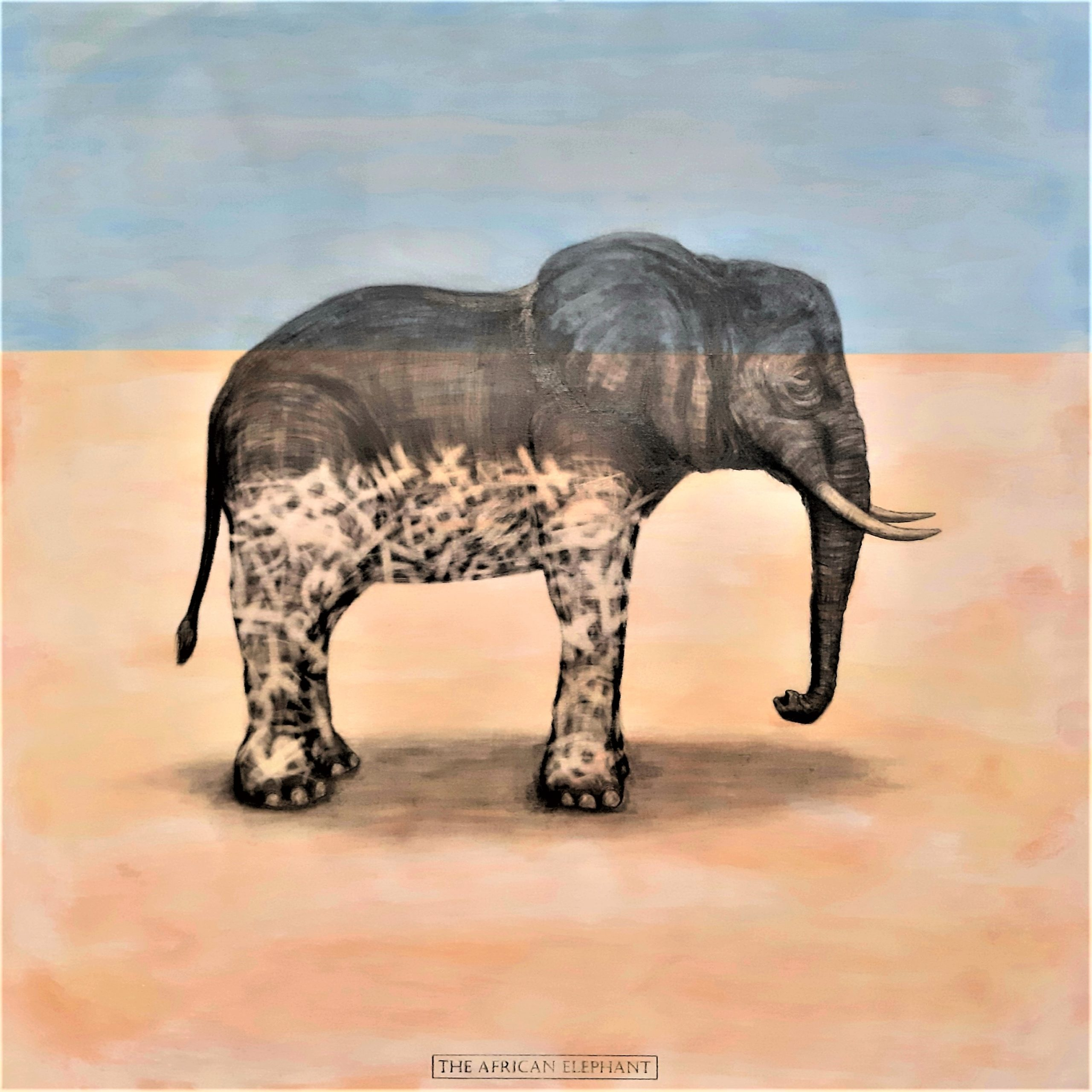 The African Elephant, 2019. Graphite and acrylic on plywood. Framed in white varnished obeche. 65 x 65 x 4 cm. £1,200