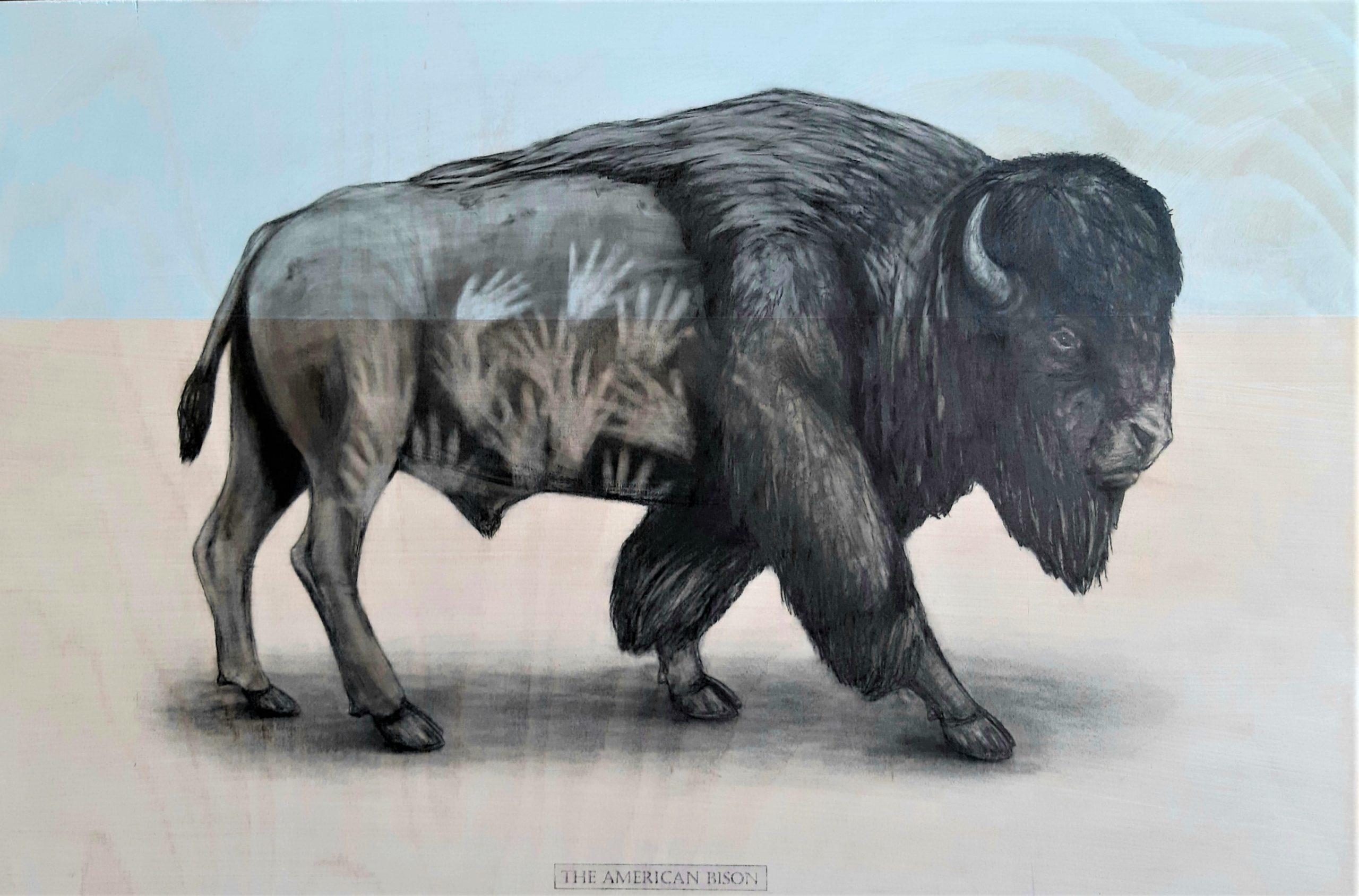 The American Bison, 2020. Graphite and acrylic on plywood. Framed in white varnished obeche. 45 x 65 x 4 cm. £900