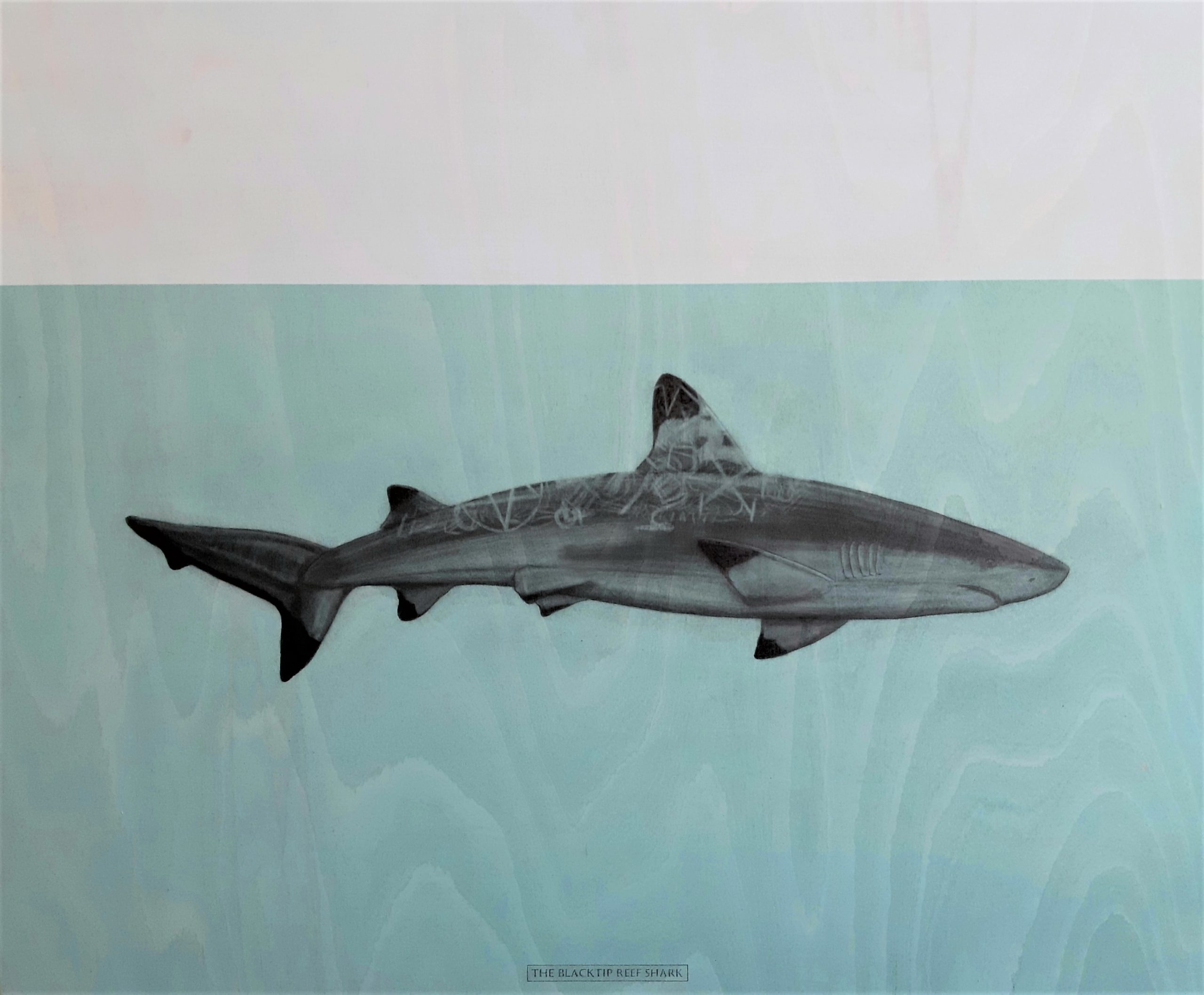 The Blacktip reef shark, 2020. Graphite and acrylic on plywood. Framed in white varnished obeche. 70 x 85 x 4 cm. £1,600