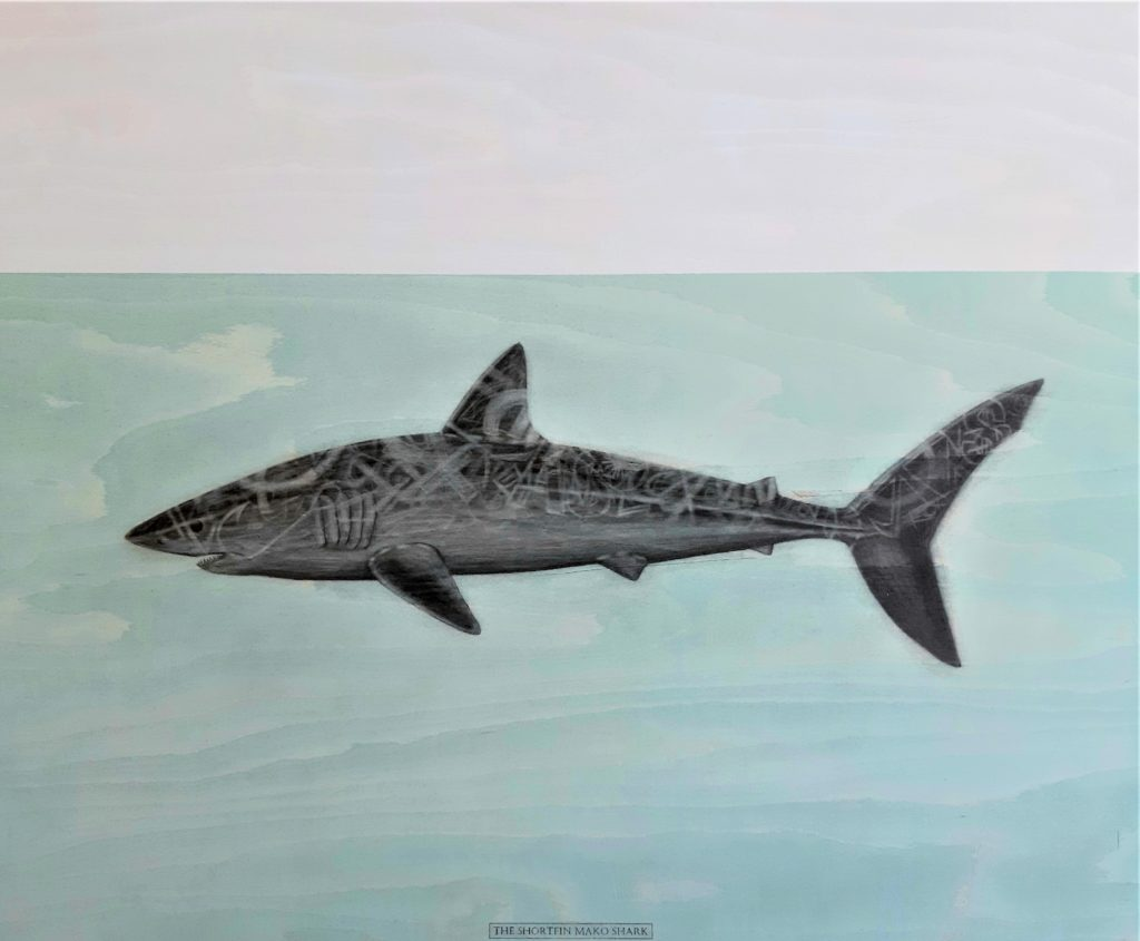 The Shortfin Mako shark, 2020. Graphite and acrylic on plywood. 70 x 85 cm.