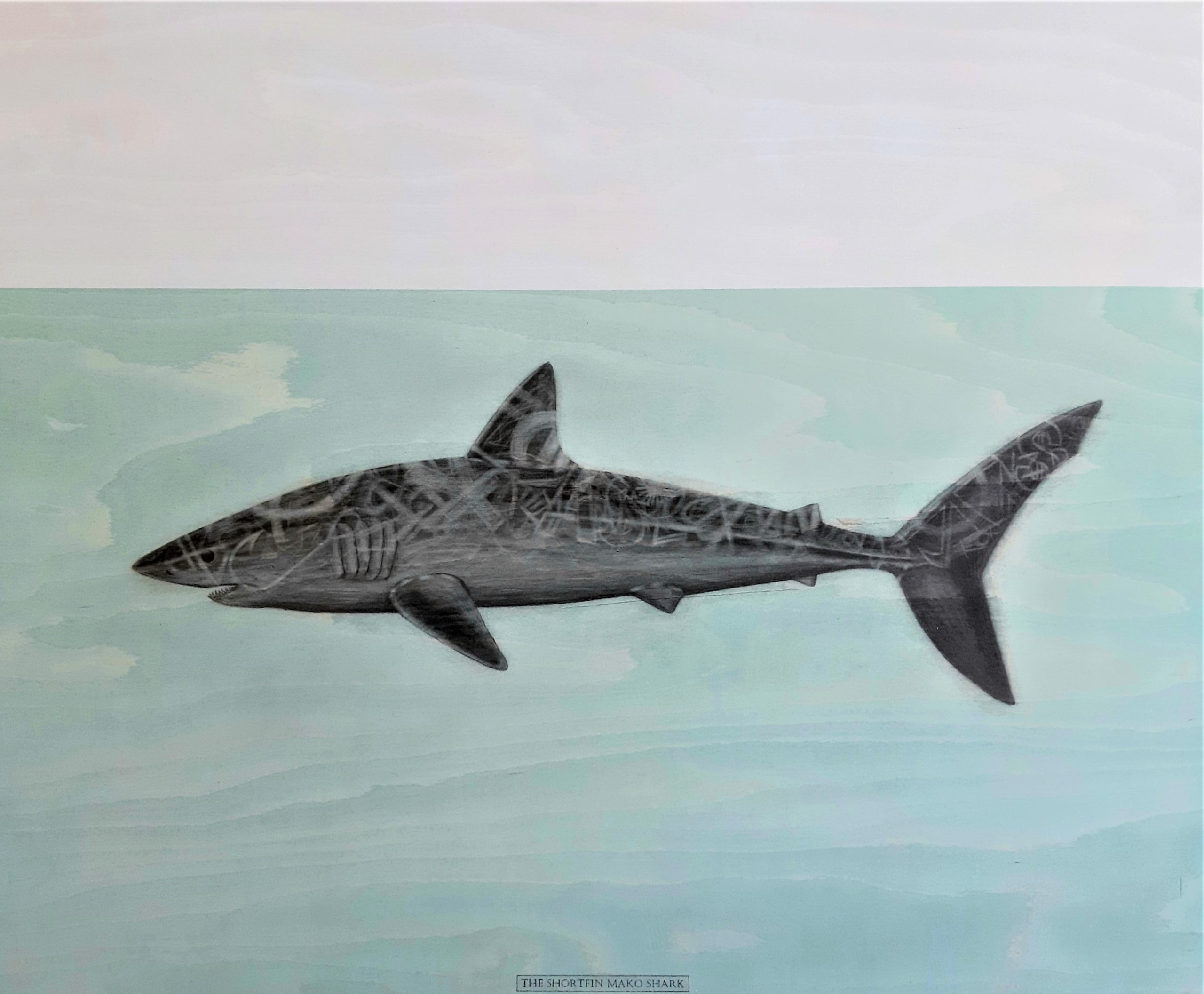 The Shortfin Mako Shark, 2020. Graphite and acrylic on plywood. Framed in white varnished obeche. 70 x 85 x 4 cm. £1,600