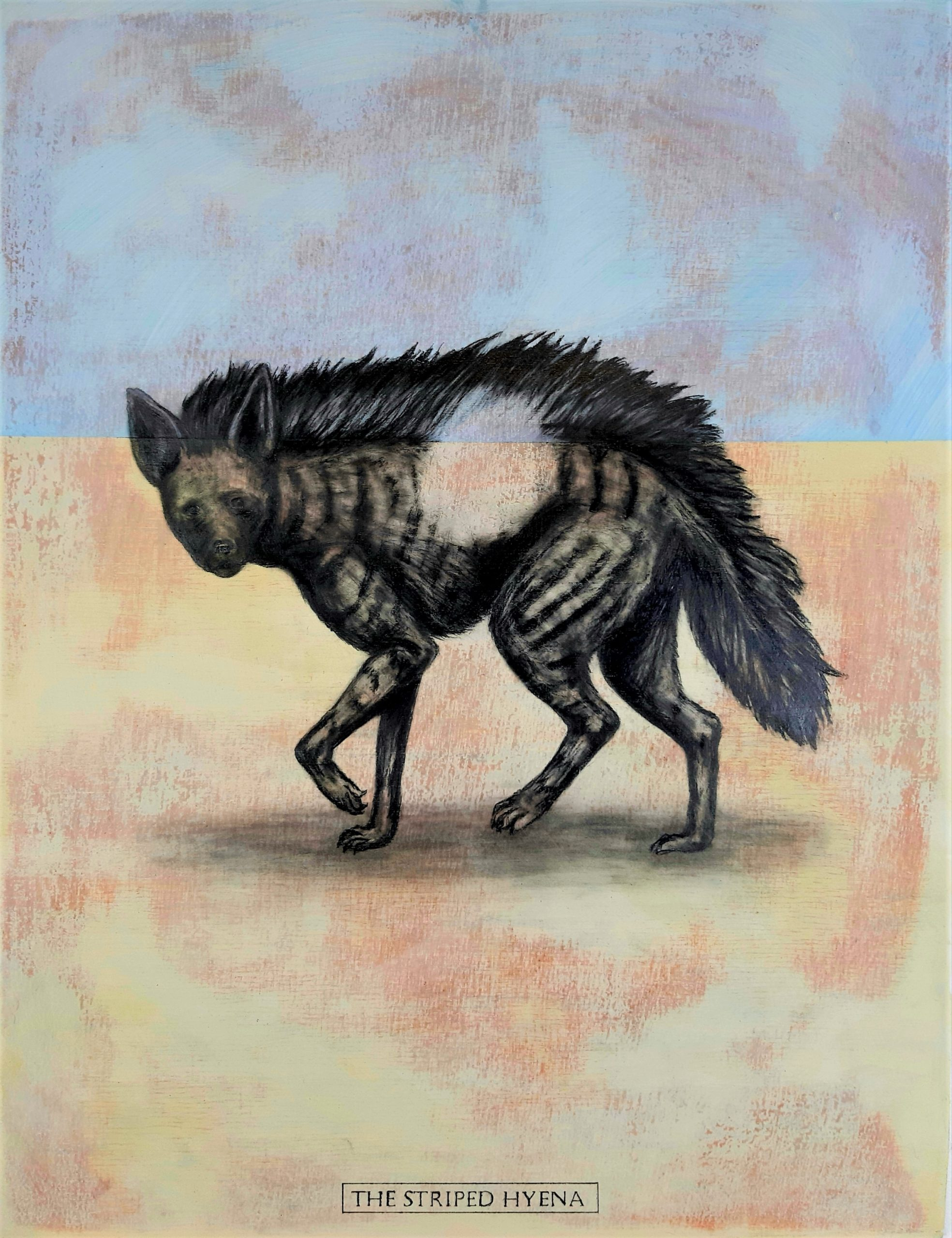 The Striped Hyena, 2019. Graphite and acrylic on plywood. Framed in white varnished obeche. 45 x 34 x 4 cm. £600