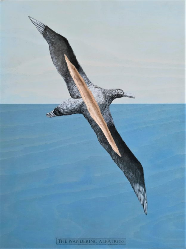 The Wandering Albatross, 2020. Ink and acrylic on plywood. 34 x 45 cm.