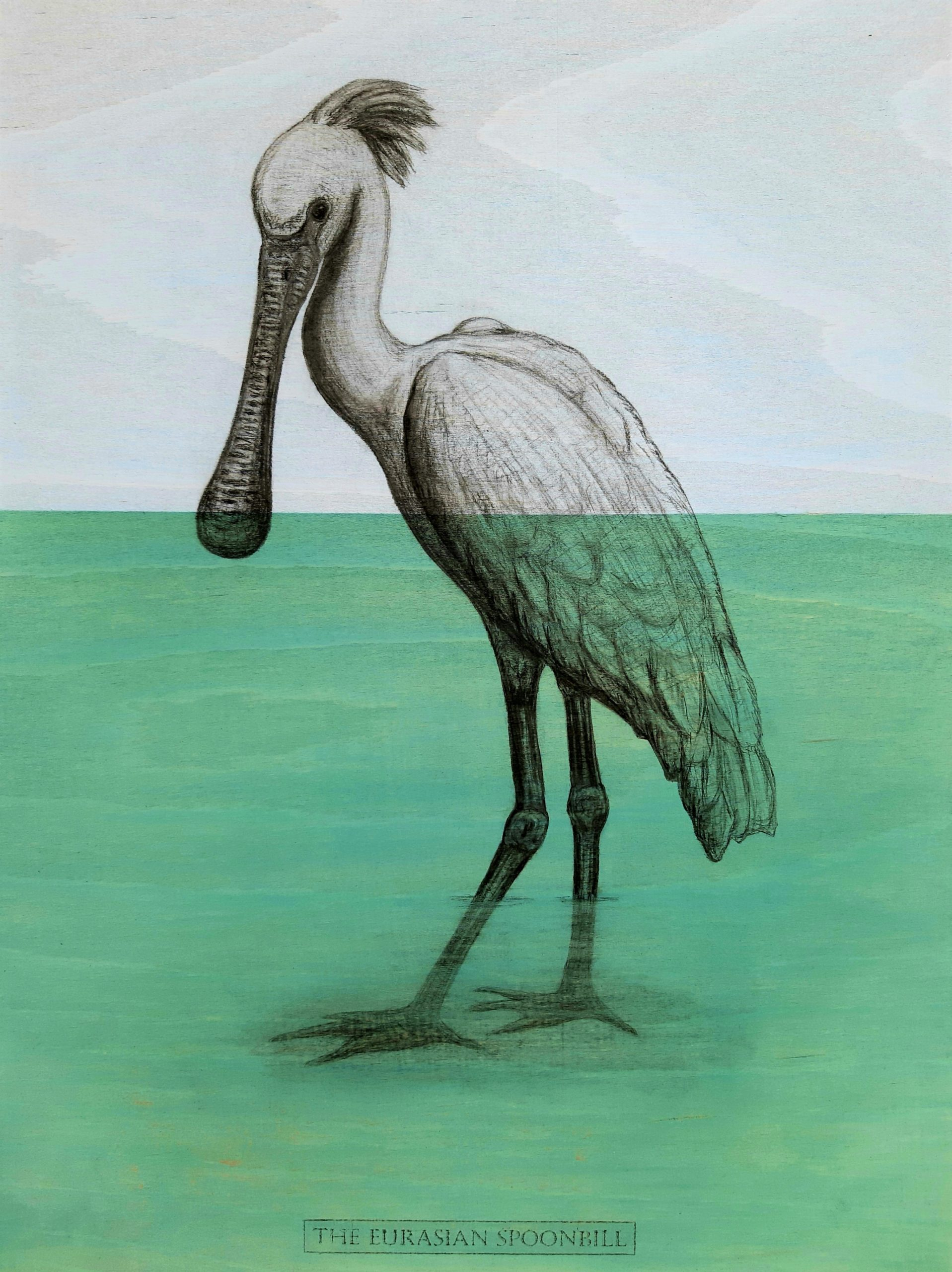 The Eurasian Spoonbill, 2020. Charcoal and acrylic on plywood. 46 x 35 cm. £600.