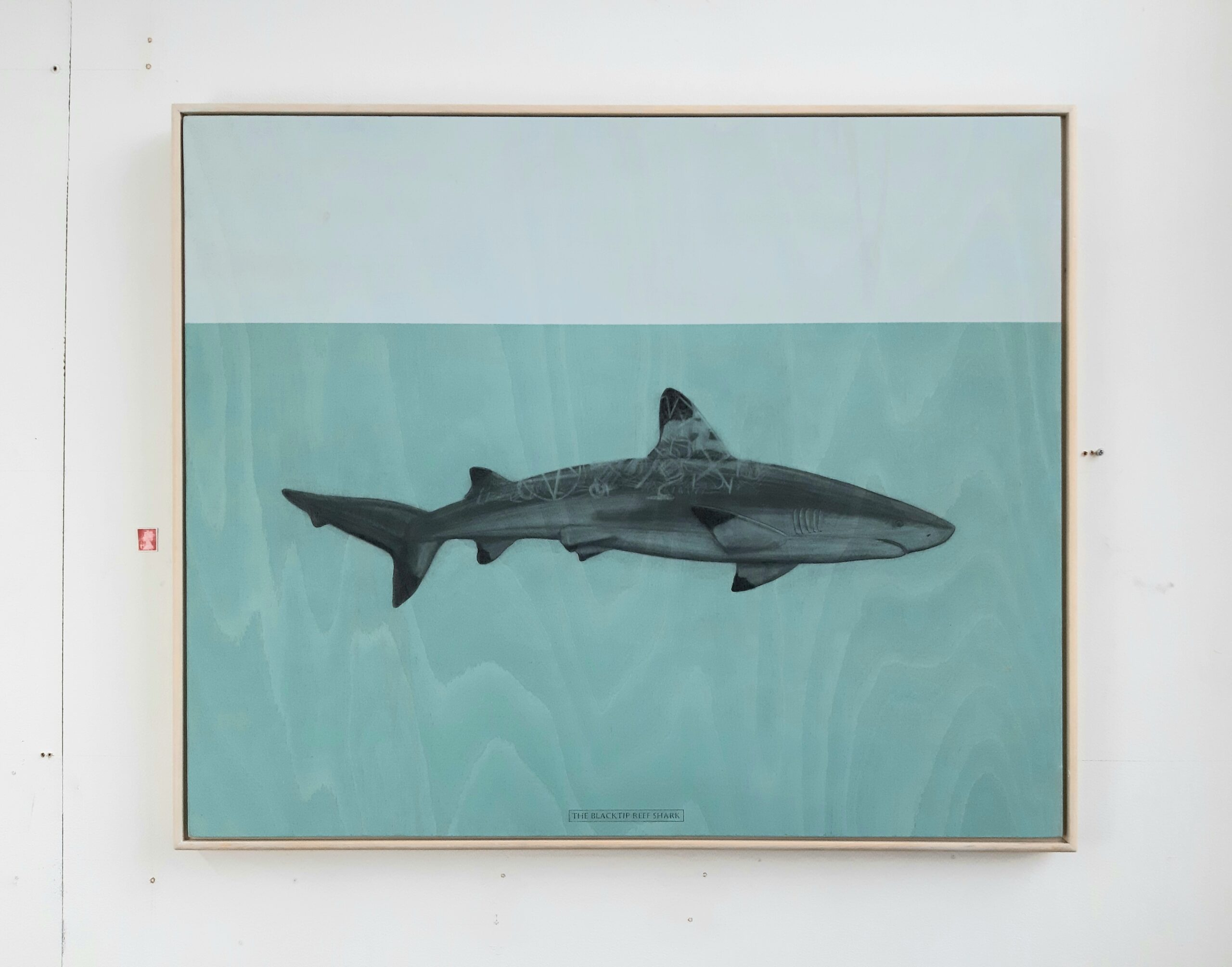 The Blacktip reef Shark, 2020. Graphite and acrylic on plywood. 70 x 85 x 4 cm.