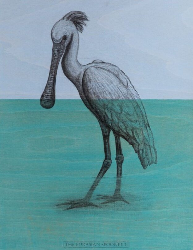 The Eurasian Spoonbill, 2020. Charcoal and acrylic on plywood. 46 x 35 cm.