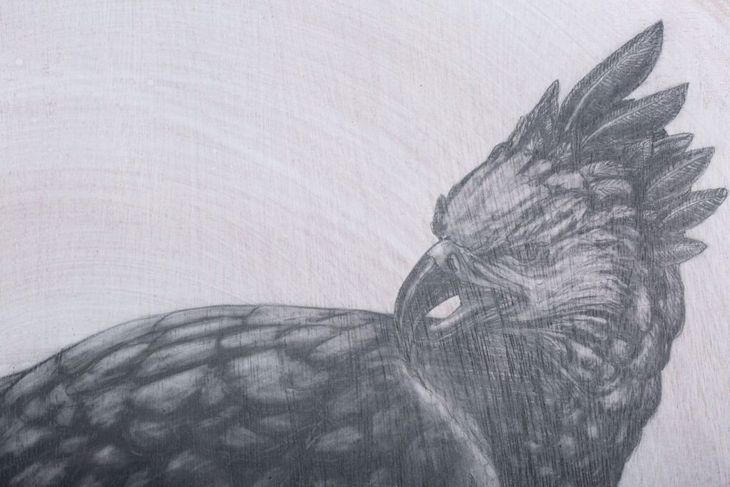 Detail from: The Harpy Eagle. Graphite on white washed plywood that is then sanded. 65 x 65 x 4 cm. Framed in white varnished obeche. 2019