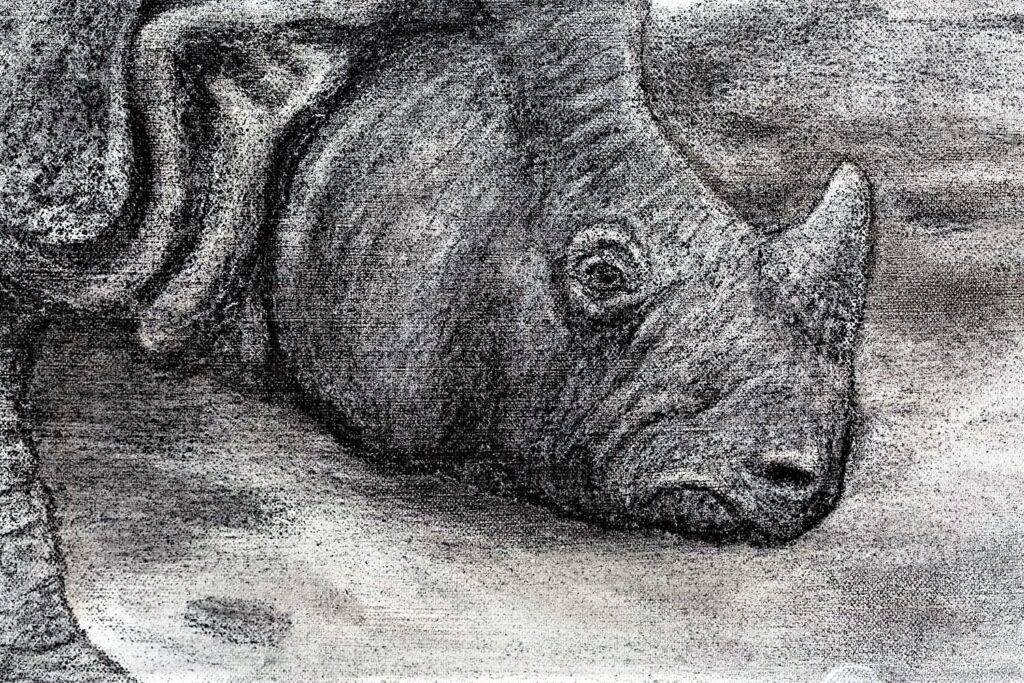 The Indian Rhinoceros detail