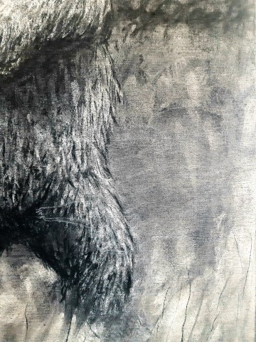 The Grizzly Bear, 2021. Charcoal and chalk on canvas. 87 x 72 cm. detail 1