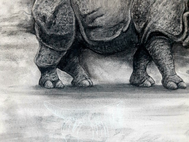 The Indian Rhinoceros, 2021. Charcoal and chalk on primed canvas. 61 x 71 cm .Detail 1