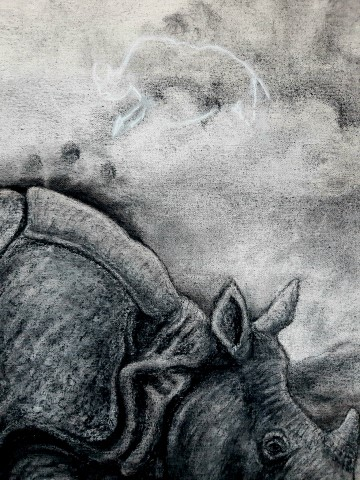 The Indian Rhinoceros, 2021. Charcoal and chalk on primed canvas. 61 x 71 cm. Detail 3