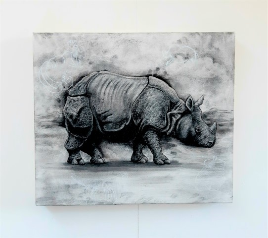 The Indian Rhinoceros, 2021. Charcoal and chalk on primed canvas. 61 x 71 cm. whole piece