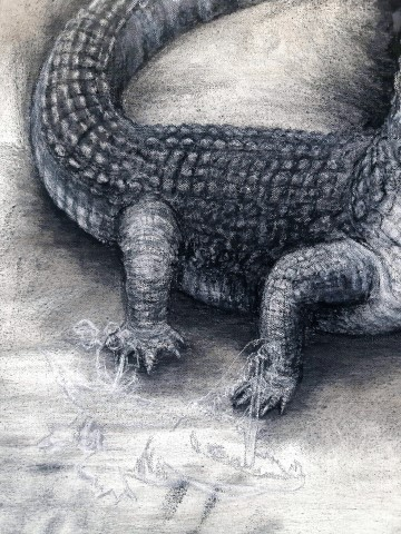 The Nile Crocodile (small), 2021. Charcoal and chalk on primed canvas. 71 x 61 cm. detail 2