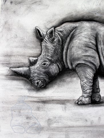 The Northern White Rhinoceros, 2021. Charcoal and chalk on primed canvas. 61 x 71 cm. detail 3