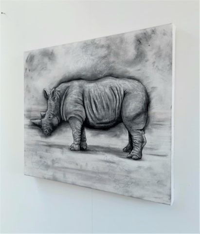 The Northern White Rhinoceros, 2021. Charcoal and chalk on primed canvas. 61 x 71 cm. side view