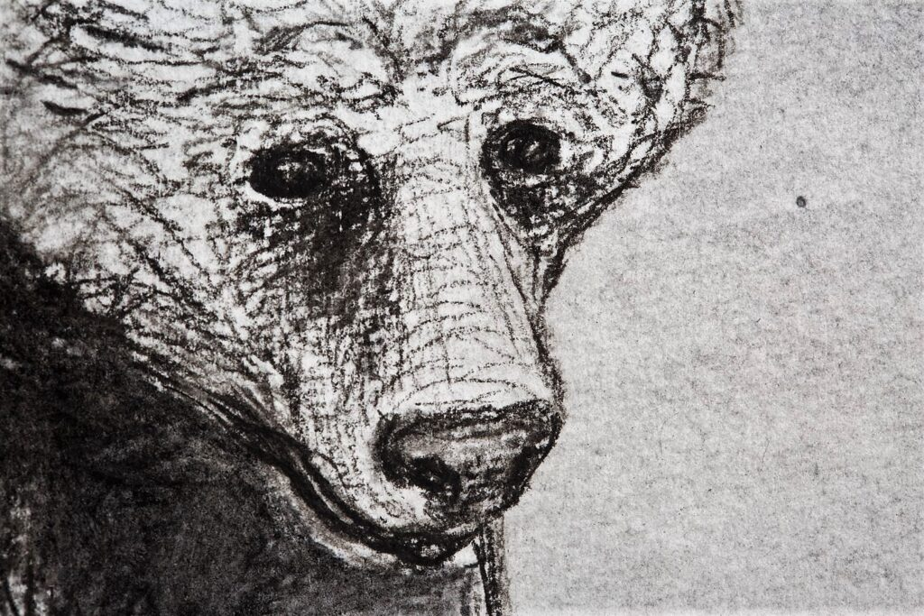Grizzly with Tlingit bear mask. Detail