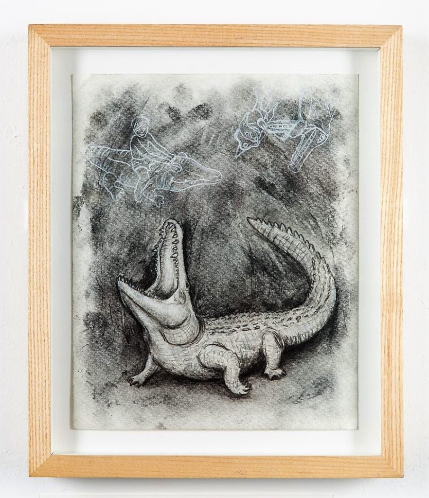 Croc study, 2021. Charcoal and chalk on cartridge paper. Framed in ash. 32 x 26 x 4 cm.