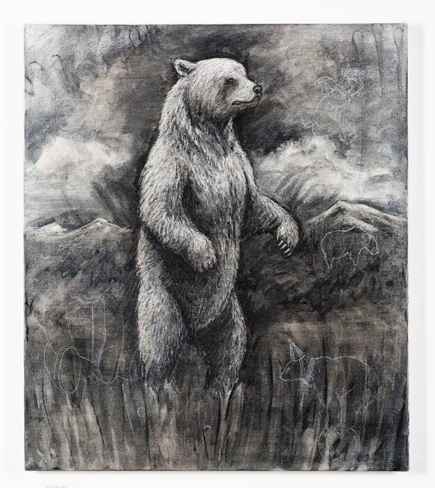 The Grizzly Bear, 2021. Charcoal and chalk on canvas. 71 x 61 cm.
