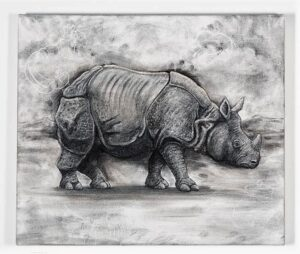 The Indian Rhinoceros, 2021. Charcoal and chalk on primed canvas. 61 x 71 cm.